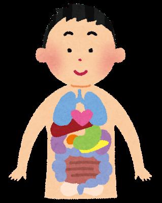 五臓六腑の「肝」と「ストレス」