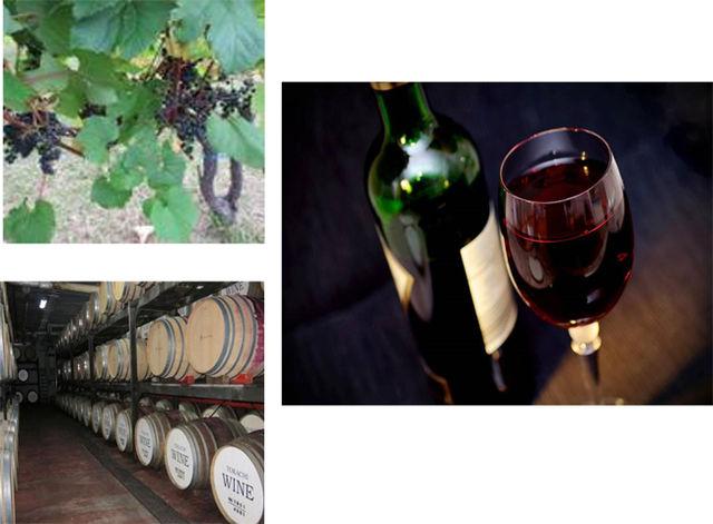 池田ワイン、ブドウ、樽の写真