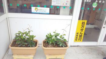 ★手稲前田店★